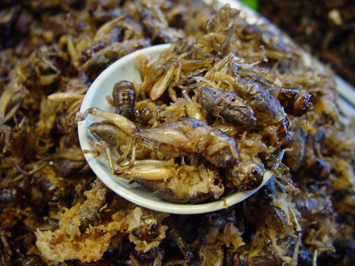Bữa tiệc côn trùng - Tất tần tật kinh nghiệm du lịch Chiang Mai Thái Lan