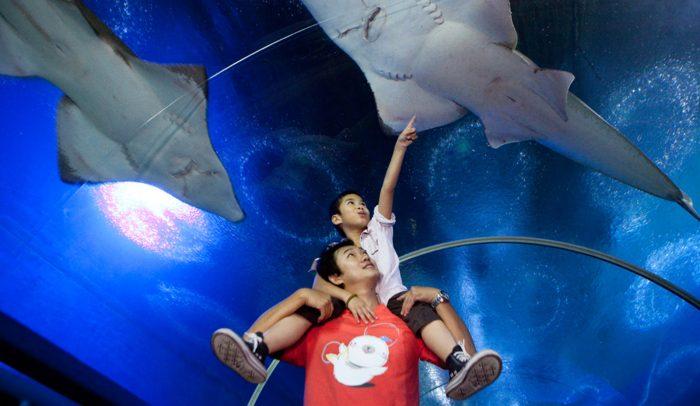 Thủy cung - Điểm tham quan Pattaya