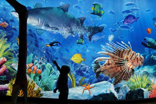 Sea Life Bangkok Ocean World - Điểm vui chơi cho trẻ em ở Bangkok