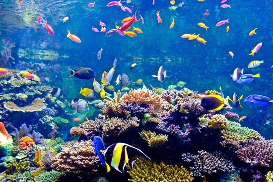thủy cung S.E.A. Aquarium Singapore