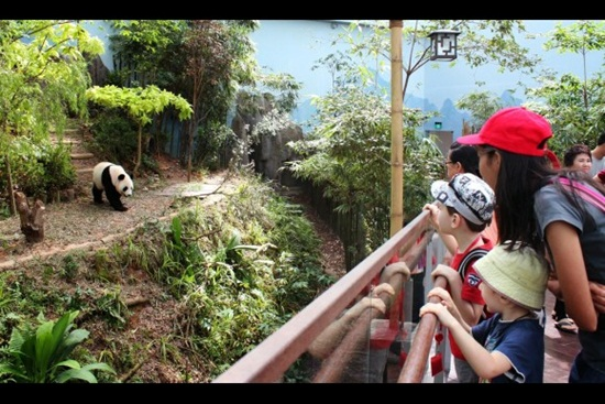 Sẵn sàng một chuyến phiêu lưu hoang dã với river safari singapore