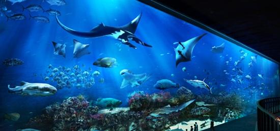 Những thực tế tuyệt vời khi đi tour Singapore   Kinh-nghiem-tham-quan-thuy-cung-sea-aquarium-singapore-2