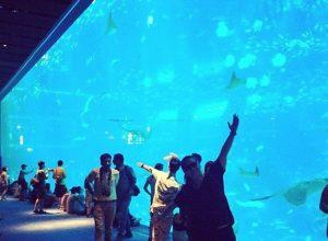 Cùng ngắm nhìn hơn 50.000 loài sinh vật sống dưới nước tại sea aquarium singapore