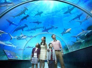 Sea aquarium singapore - Thưởng ngoạn trọn vẹn vẻ đẹp muôn màu của đại dương