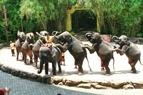 Safari bangkok là một điểm đến hấp dẫn không thể bỏ qua khi tới Bangkok