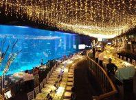 Sea aquarium singapore với những khoảnh khắc khám phá đáy biển cực kỳ thú vị