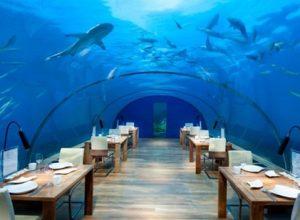 Nhà hàng dưới nước Ocean Restaurant ở Sea Aquarium Singapore