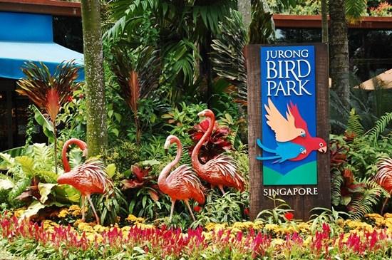 Hướng dẫn tham quan vườn thú Singapore Zoo, Night Safari và Jurong Bird Park