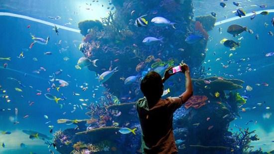 Sea Aquarium và Adventure Cove Waterparka với những trải nghiệm đầy thú vị trên đảo Sentosa