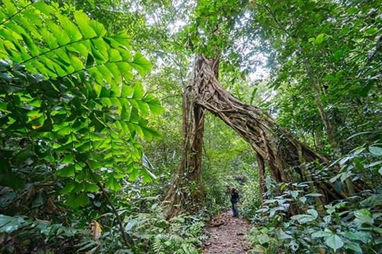Du lịch Cát Bà nơi hội tụ giữa rừng với biển