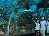 Một mình khám phá Universal Studio và S.E.A Aquarium trên đảo Sentosa Singaore