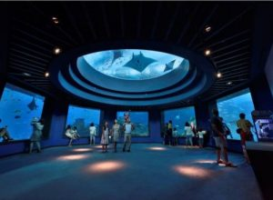 Tham quan sea aquarium singapore cùng Kite Travel