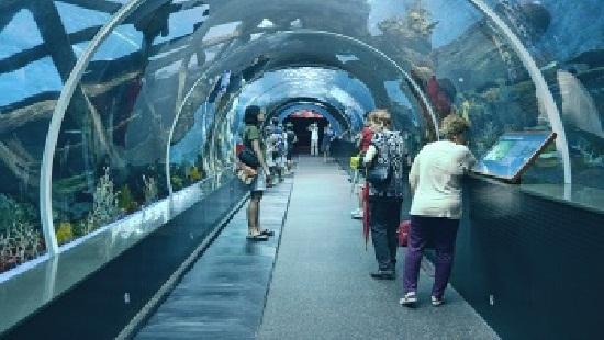 Bí quyết đi lại tới Thủy cung S.E.A Aquarium Singapore