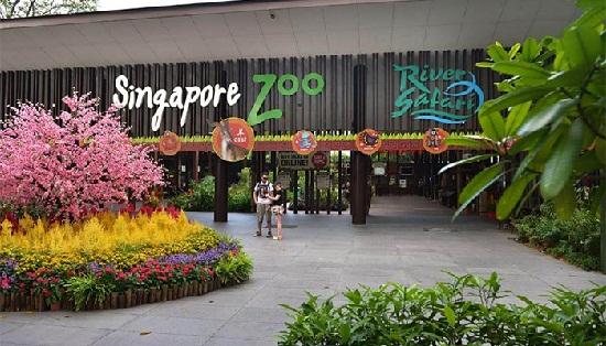 Vườn thú Singapore Zoo
