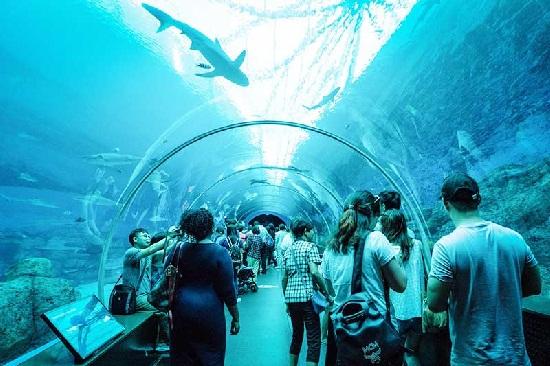 Kinh nghiệm du lịch S.E.A. Aquarium   Gia-ve-sea-aquarium-singapore-thuy-cung-lon-nhat-the-gioi-1