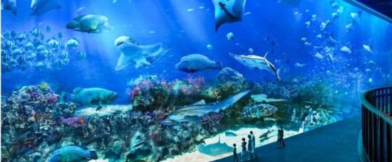 Review thủy cung singapore aquarium trên đảo sentosa