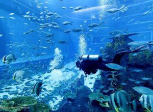 kinh nghiệm đi sea aquarium