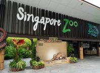 Những lưu ý cần biết khi đi Singapore Zoo