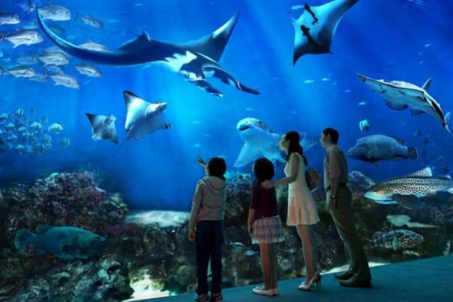giá vé sea aquarium singapore
