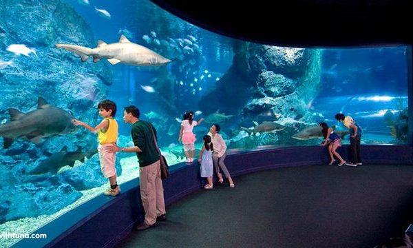 Thủy cung Sealife Bangkok