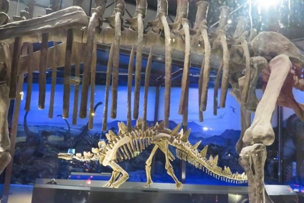 Vé Dinosaur Planet Bangkok
