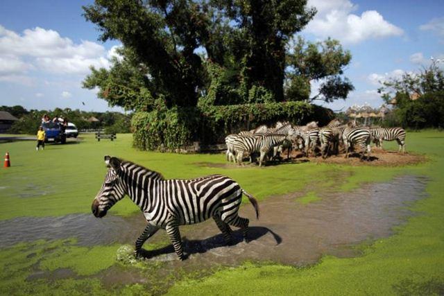 Vé Safari World Bangkok