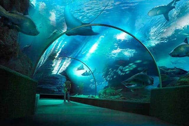 Vé Underwater World Pattaya