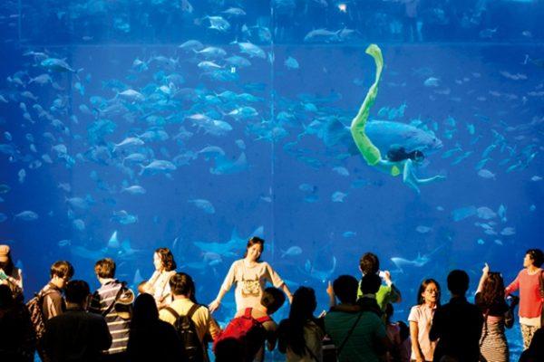 Vé Jeju Aquaplanet Discount Ticket
