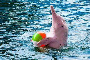 18-dolphin-world-pattaya