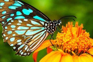 Chuyến Tham Quan Nửa Ngày Đến Các Khu Vườn và Công Viên