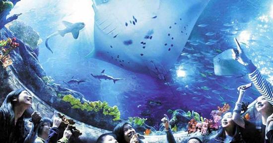Vé Vào Cửa Công Viên Đại Dương và Dịch Vụ Đưa Đón (Có Tùy Chọn Coupon Ăn Uống)