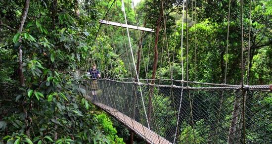 Tour Tham Quan Vườn Quốc Gia Taman Negara Một Ngày