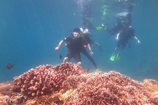 Tour Đảo Bàng Lớn 1 ngày