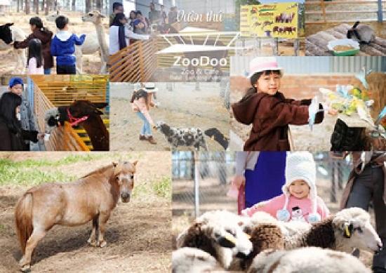 Tour Đồi Chè Cầu Đất Zoodoo Đà Lạt 1 ngày