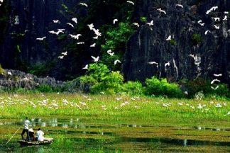 Tour Hà Nội - Cố Đô Hoa Lư - Vườn chim Thung Nham