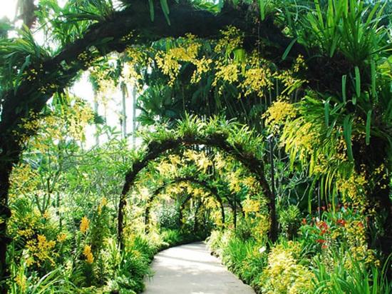 Singapore Botanic Gardens công viên đẹp nhất châu Á