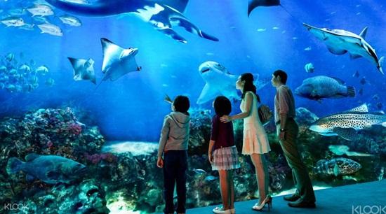 S.e.a aquarium và trick eye museum điểm vui chơi yêu thích của trẻ nhỏ