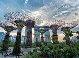 Kinh nghiệm đi Gardens by the Bay Singapore