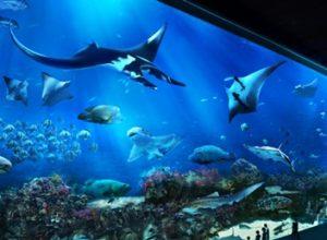 Kinh nghiệm tham quan thủy cung sea aquarium singapore