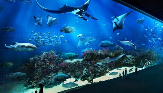 Kinh nghiệm đi chơi thủy cung S.E.A Aquarium Singapore