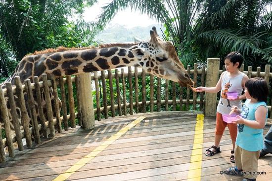 Hướng dẫn đi lại ở Singapore Zoo