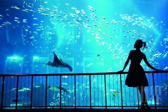 Công viên thủy cung lớn nhất thế giới sea aquarium