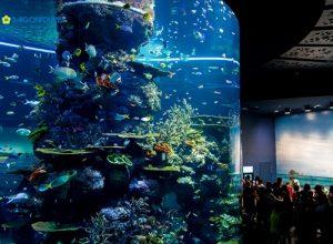 Khám phá thủy cung lớn nhất thế giới sea aquarium