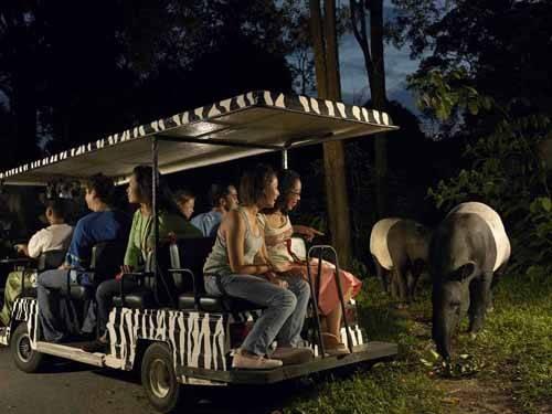 Sở thú ở Singapore nơi bé tham quan các loài hoang dã