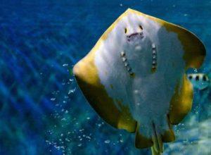 Có nên đi sea aquarium - Thủy cung lớn nhất ở Singapore