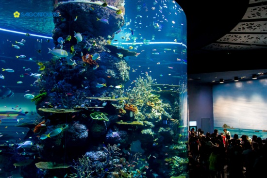 Sea aquarium ở singapore có gì hay ?