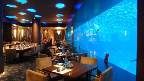 Tham quan sea aquarium singapore cùng Kite Travel