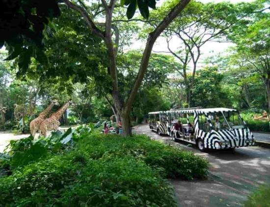 Chơi gì ở singapore zoo