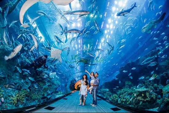 Tham quan sea aquarium singapore mất bao lâu