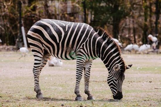 Chơi gì ở Safari Bangkok ?